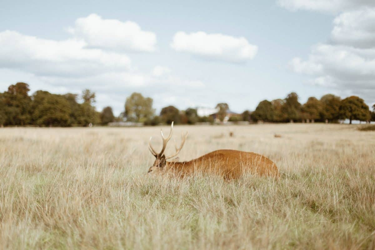 Richmond park - alternative places to visit in London