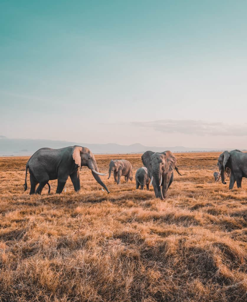 Tripsget Blog Year 20 18 in Review Our African journey: 7-day Safari in Kenya and Tanzania. 5 parks in 7 days