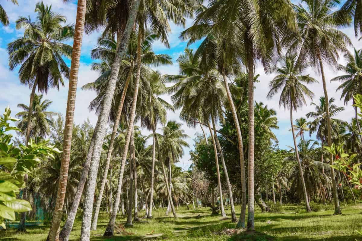 Things to do in La Digue